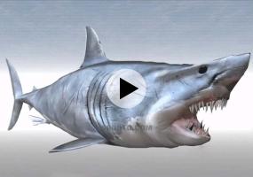 SketchUp建模系列教程 | 鲨鱼
