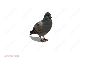 鸟类0001-SketchUp草图大师模型