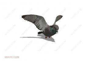 鸟类0003-SketchUp草图大师模型
