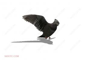 鸟类0006-SketchUp草图大师模型