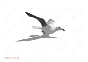 鸟类0009-SketchUp草图大师模型