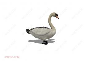 鸟类00010-SketchUp草图大师模型