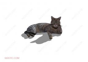 猫咪0025-SketchUp草图大师模型