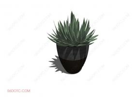 植物0003-SketchUp草图大师模型