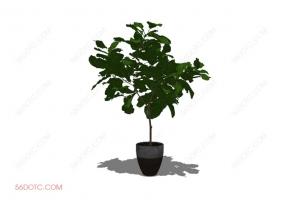 植物0004-SketchUp草图大师模型