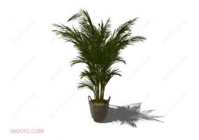 植物0005-SketchUp草图大师模型