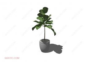 植物0006-SketchUp草图大师模型