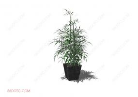 植物0007-SketchUp草图大师模型