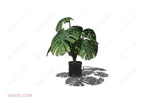 植物0008-SketchUp草图大师模型