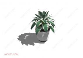 植物00017-SketchUp草图大师模型