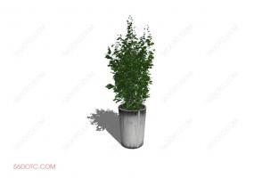 植物00020-SketchUp草图大师模型