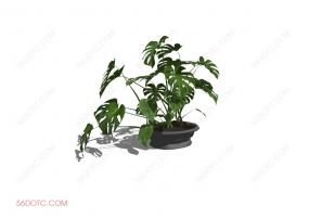 植物00021-SketchUp草图大师模型
