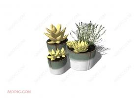 植物00024-SketchUp草图大师模型