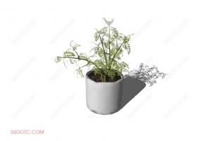 植物00031-SketchUp草图大师模型