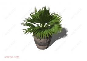 植物00032-SketchUp草图大师模型