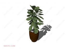 植物00034-SketchUp草图大师模型