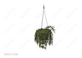 植物00035-SketchUp草图大师模型