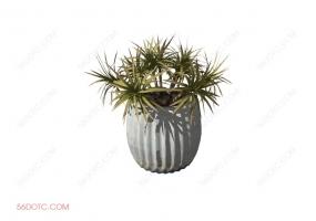植物00036-SketchUp草图大师模型