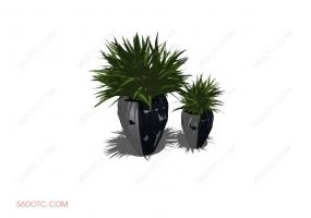 植物00041-SketchUp草图大师模型
