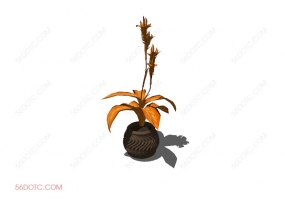 植物00042-SketchUp草图大师模型