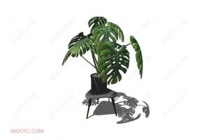 植物00043-SketchUp草图大师模型