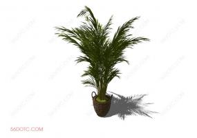 植物00044-SketchUp草图大师模型
