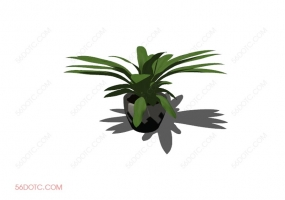 植物00045-SketchUp草图大师模型