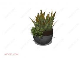 植物00048-SketchUp草图大师模型