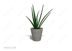 植物000165-SketchUp草图大师模型