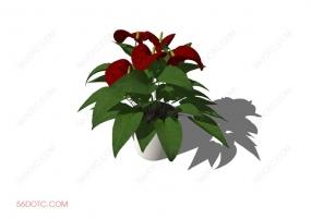 植物000172-SketchUp草图大师模型