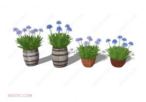 植物000177-SketchUp草图大师模型