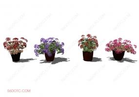 植物000179-SketchUp草图大师模型