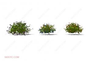 植物000181-SketchUp草图大师模型