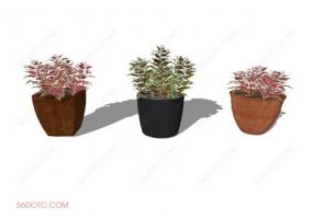 植物000183-SketchUp草图大师模型