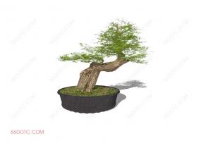 植物000184-SketchUp草图大师模型