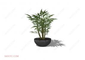 植物000185-SketchUp草图大师模型