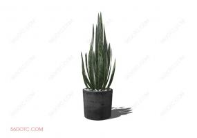 植物000188-SketchUp草图大师模型