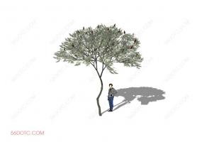 植物000230-SketchUp草图大师模型