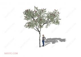 植物000232-SketchUp草图大师模型