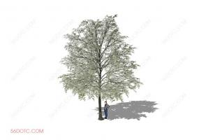 植物000233-SketchUp草图大师模型
