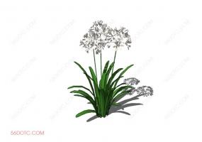 植物000242-SketchUp草图大师模型