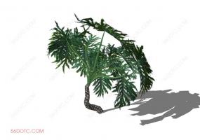 植物000243-SketchUp草图大师模型