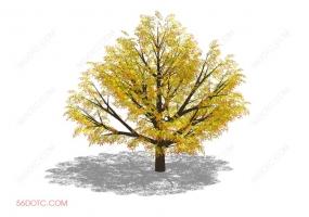 植物000245-SketchUp草图大师模型
