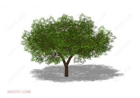 植物000247-SketchUp草图大师模型
