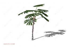 植物000248-SketchUp草图大师模型