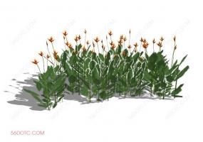 植物000249-SketchUp草图大师模型