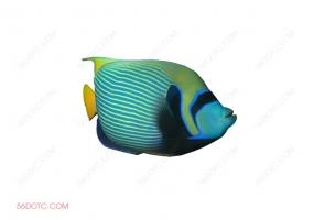 动物00032-SketchUp草图大师模型