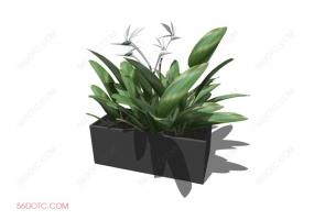 植物00063-SketchUp草图大师模型