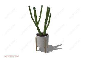 植物00065-SketchUp草图大师模型