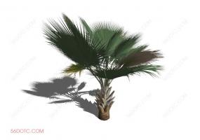 植物000266-SketchUp草图大师模型